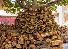 Een stapel van gehakte die bomen rond een vijgeboom worden gestapeld royalty-vrije stock afbeelding