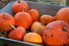 Een stapel van oranje pompoenen royalty-vrije stock fotografie