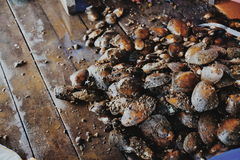 Een stapel van parel zoetwatermossel (Chamberlainia-hainesiana) in aquatisch cultuurcentrum royalty-vrije stock fotografie
