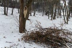 Een stapel van vernietigd hout royalty-vrije stock fotografie