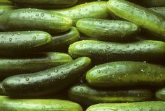 Een stapel van verse komkommers Royalty-vrije Stock Foto's