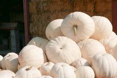Een stapel van witte pompoenen Stock Foto's