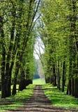 Een steeg in de lente Royalty-vrije Stock Foto
