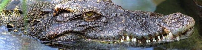 Een steek van vier foto's van een krokodil Royalty-vrije Stock Foto's