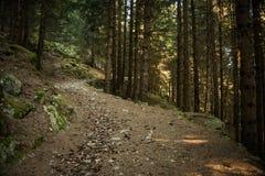 Een steenachtige weg in een donker bos slechts klein zonlicht tussen de bomen royalty-vrije stock afbeeldingen