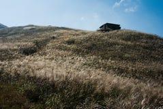 Een steenhuis met grassen in backlight Royalty-vrije Stock Afbeeldingen