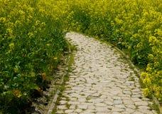 Een steenweg door een gebied van geel raapzaad bloeit Stock Fotografie