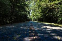 Een steenweg in het bos stock afbeeldingen