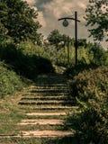 Een steenweg in het park tussen de struiken royalty-vrije stock afbeelding