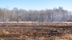 Een sterke brand spreidt in windvlagen van wind uit door droog gras royalty-vrije stock afbeelding