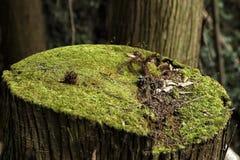 Een stomp van een boom Royalty-vrije Stock Fotografie