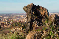 Een Stompboom op de heuvel Stock Foto