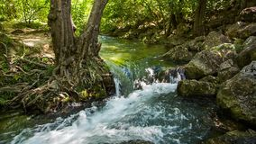 Een stormachtige stroom van rivierwater tussen rotsen en een boom stock footage
