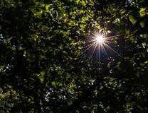 Een straal van licht Stock Foto's