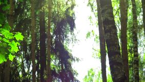 Een straal van zonneschijn in een donkere bos, mooie bokeh, verticale beweging stock videobeelden