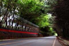 Een straat onder bomen met een motorfietsspoor Stock Foto's