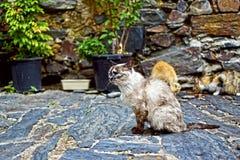 Een straatkat met een verloren blik Royalty-vrije Stock Afbeelding