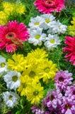 Een stralende en kleurrijke bloemensamenstelling Stock Foto's