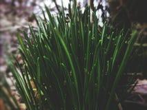 Een streepje van groen Stock Foto's