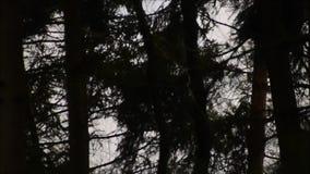 Een streng onweer in het hout stock videobeelden