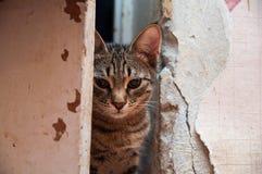 Een strenge kat is in een deuropening royalty-vrije stock foto's