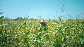Een strohoed wordt gezet op een graansteel in cornfield, een vogelverschrikker op een gebied stock videobeelden