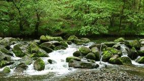 Een stromende rivier in Dartmoor, Devon stock footage