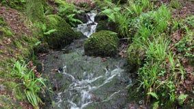 Een stromende rivier in Dartmoor, Devon stock videobeelden