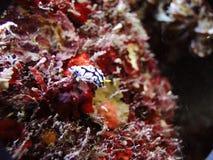Een strook Ovula (ovum) Stock Foto