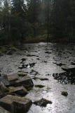 Een stroom bij het bos stock foto