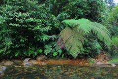 Een stroomhoogtepunt van rode algea en een duidelijke rivier in de wildernis met reusachtige varens stock afbeeldingen