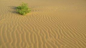 Een struik aan vlotte oppervlakte van het zand met golven in de woestijn royalty-vrije stock afbeeldingen