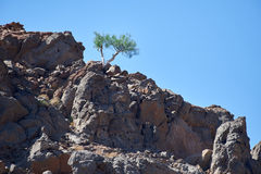 Een struik die op rotsachtige grond overleven royalty-vrije stock foto