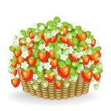 Een struik van bessen groeit in de mand Rijpe, sappige, heerlijke aardbeien Een bron van nuttige vitaminen en micro-elementen Vec vector illustratie