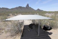 Een Struisvogelfamilie, de Struisvogelboerderij van Haancogburn, Picacho, Arizo Stock Afbeeldingen