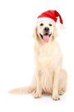 Een studio die van een hond is ontsproten die een Kerstmishoed draagt Stock Afbeelding