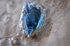 Een stuk speelgoed dolfijn in het water Royalty-vrije Stock Foto's