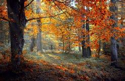 Een stuk van de herfst stock foto