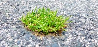 Een stuk van gras is geboren in het asfalt Een beeld dat de macht van aard over de stad symboliseert stock fotografie