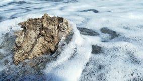 Een stuk van hout door de golven wordt omwikkeld die Royalty-vrije Stock Afbeeldingen