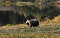 Een stuk van hout op de rand van de vijver stock afbeelding
