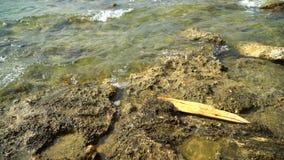 Een stuk van houten die Raad door de golven aan de rotsachtige kust wordt geslagen stock video