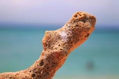 Een stuk van omhoog geschoten koraal dicht Stock Afbeeldingen