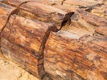 Een stuk van van angst verstijfd houten, Van angst verstijfd bos in Damaraland, Namibië, Afrika stock fotografie