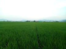 Een stuk weelderige groene gebieden Stock Afbeelding