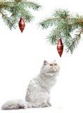 Een symbool van jaar 2011 witte kat Stock Foto