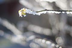 Een tak in de sneeuw bij nacht Royalty-vrije Stock Afbeelding