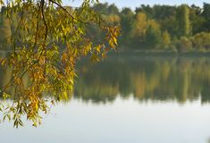 Een tak over het water De herfst royalty-vrije stock afbeelding