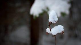 Een tak in sneeuw wordt behandeld die stock fotografie