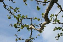 Een tak van een boom stock afbeelding